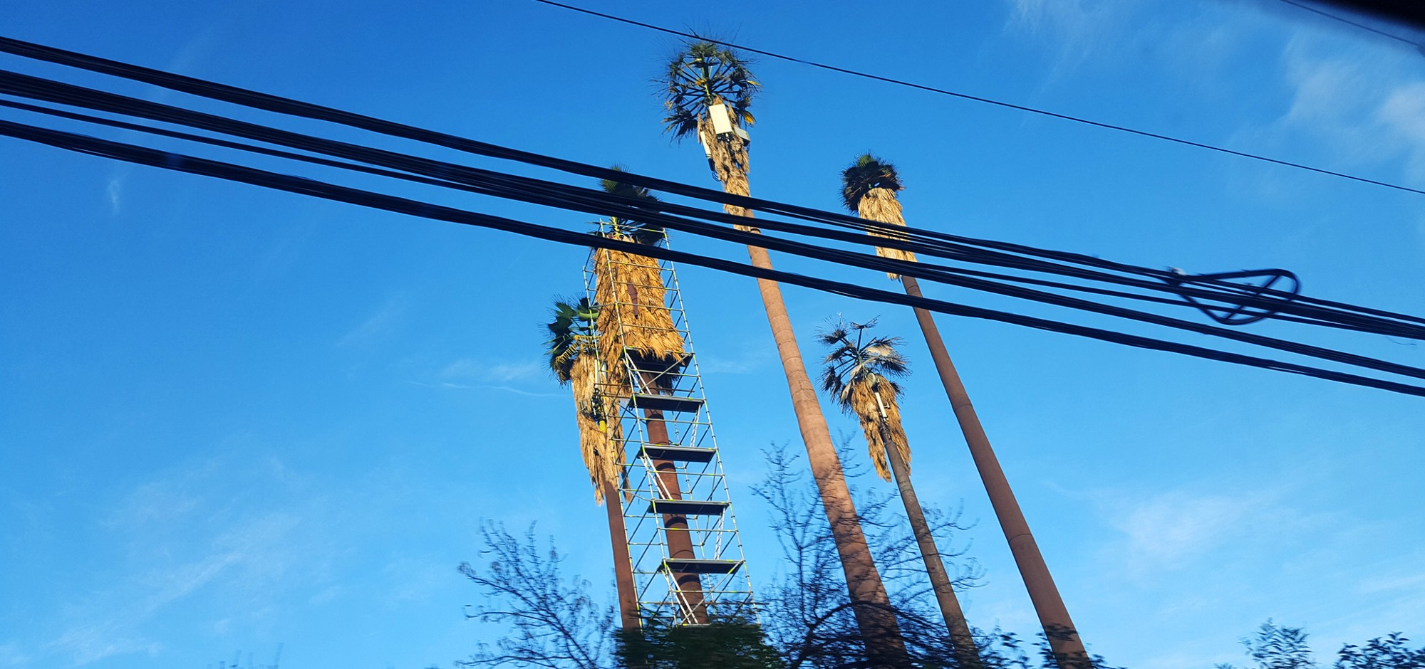 Disguised cellphone towers, Santiago, Chile