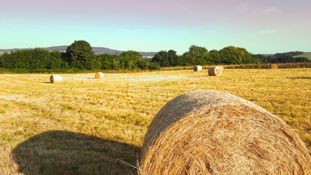 A dry grass field with hay bales and trees and hills in the distance
